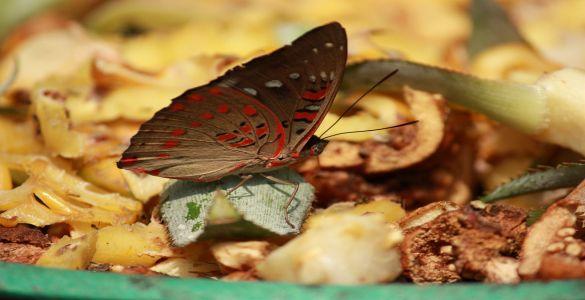Vasai Butterfly Park