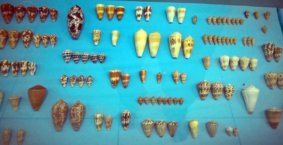 India Seashell Museum - Mahabalipuram