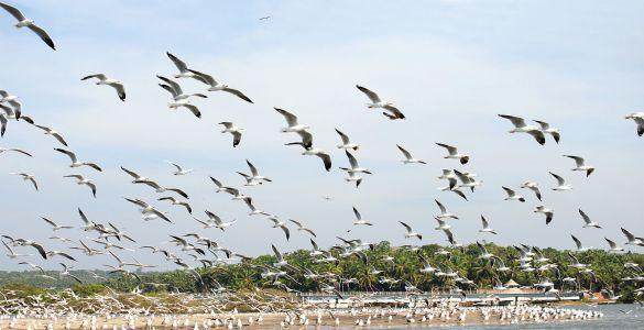 Kadalundi Bio Reserve and Bird sanctuary