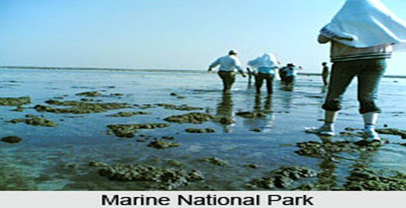 Gulf of Mannar Marine National Park - Rameswaram